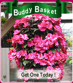 Duerr's Greenhouse Buddy Basket
