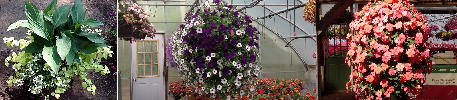 Duerrs Greenhouses - Merrimack Valley nusery serving Southern New Hampshire and Massachusetts
